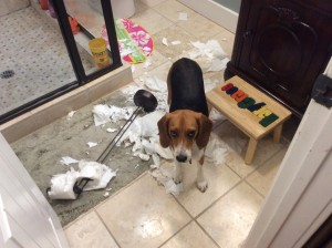 Black Jack being a stinker by chewing up the toilet paper in Thing 2's bathroom. At least he looks guilty.